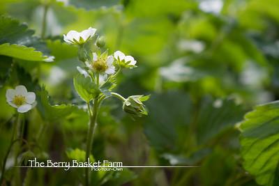BerryBasket - 2021-05-19 IMG_8086