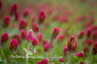 BerryBasket - 2021-05-19 IMG_8092