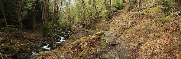 The Comb Beck and the path from Thornthwaite to Whinlatter