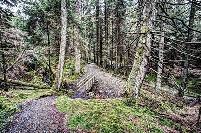 In Whinlatter Forest.