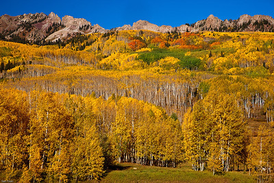 Nature's Tapestry_Crested Butte_Colorado