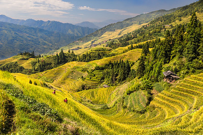 Longji Rice Terrace 2