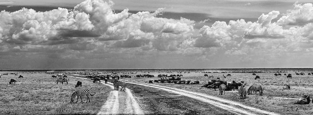 At the Serengeti 2