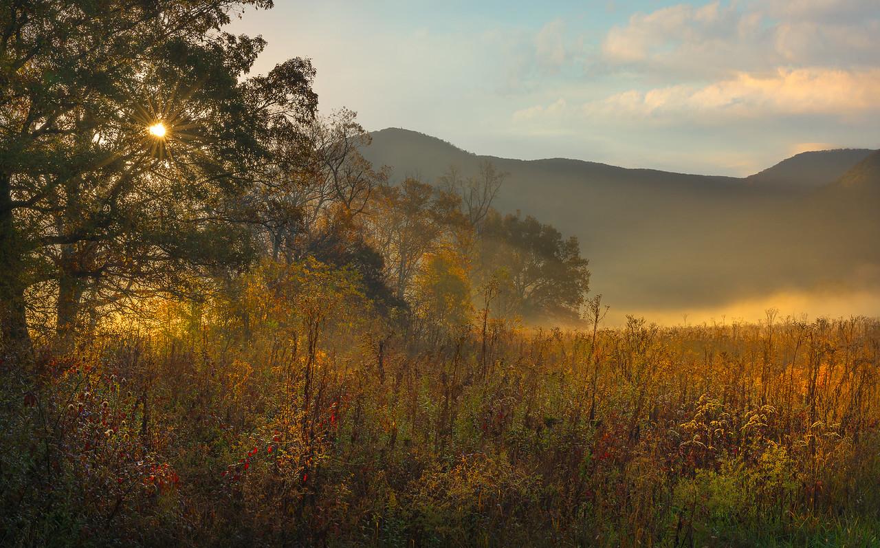 Morning Mist-5