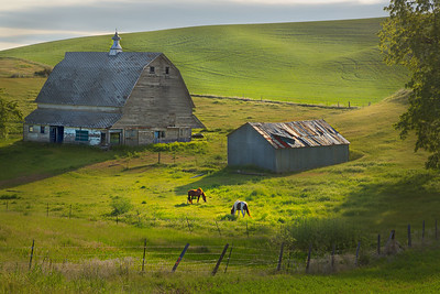 Farm in Palouse WA