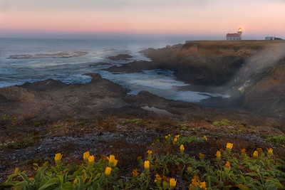 Fog rolling down the cove near Pt Cabrillo