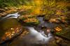 Babbling Cascades-7