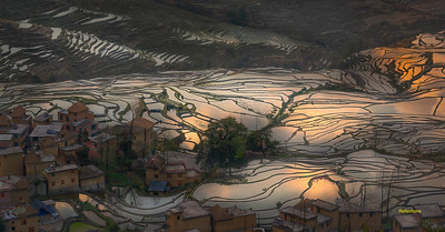 Rice Terrace Reflections
