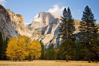 Half Dome Above the Awhanee Meadow
