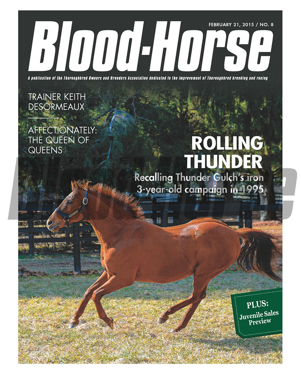 February 21, 2015 Issue 8 cover of the Blood-Horse featuring Thunder Gulch at Ashford Stud.