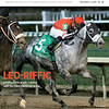 December 1,  2018 issue 49 cover of BloodHorse featuring Leo-Riffic as Leofric earns grade 1 status with his Clark Handicap score, Summerfield Sales, Red Oak Stable's Stphen Brunetti, The Last Songs of Mr. Prospector.