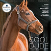 February 16, 2019, issue 7, cover of Blood Horse, Cool Dude-Undrafted still going strong at age 9, Also Inside: Bloodstock agent Marette Farrell, Fasig-Tipton Kentucky Winter sale, In my opinion: Bill Oppenheim. On the cover: Undrafted, age 9