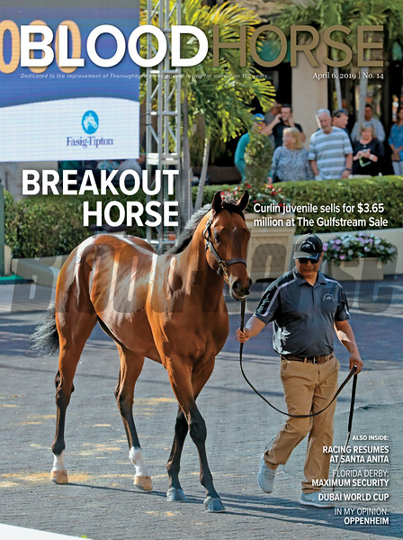 Hip 173; 2019 Fasig-Tipton Selected 2 Year Olds in Training Sale at Gulfstream Park