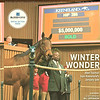 January 19, 2019 issue 3 cover of Blood Horse, featuring Winter Wonder Abel Tasman tops Keeneland's January sale, Also inside In My Opinion: Bill Oppenheim, Gatewood Bell, and the Dollase Family.