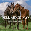 September 2021 issue 19, cover of BloodHorse; Dell Ridge Days: Lexington farm perpetuates a successful breeding and sales program Also inside: Ever Young: Del Mar Futurity celebrates 75th running; National Park: Philly area track seeks to improve safety, integrity; A Sleeping Giant Stirs: Big change cound be coming to China, and more. On the cover: Dell Ridge Farm yearlings enjoy a languid summer day. David Coyle Photo