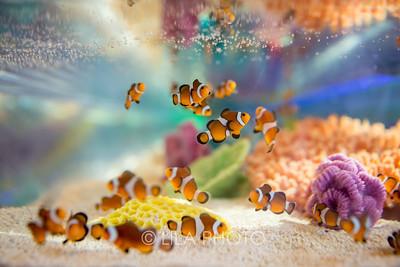 SeafoodBar_041