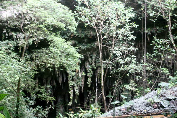 Caves of Camuy