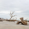 Hunting Island Boneyard Beach high resolution Panorama,