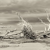 Hunting Island Boneyard Beach high resolution Panorama, sepia