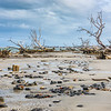 Low tide at Hunting Island State Park boneyard beach