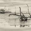 Hunting Island Boneyard Beach, Beaufort, SC