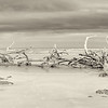 Hunting Island State Park, sepia high resolution panorama