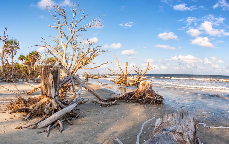 Botany Bay Plantation Boneyard Beach