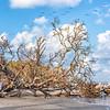 Pelican flyover, Botany Bay Plantation Boneyard Beach
