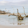 Hunting Island Boneyard Beach