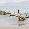 Hunting Island Boneyard Beach