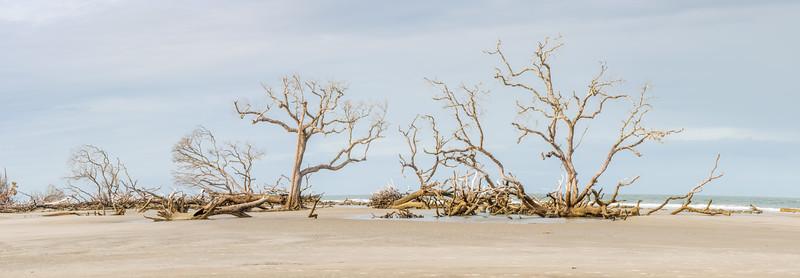 Hunting Island State Park boneyard beach