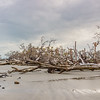 Hunting Island Boneyard Beach high resolution Panorama