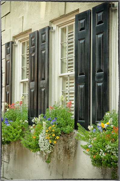 Downtown window boxes
