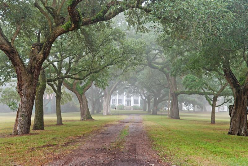 McLeod Plantation House and Avenue of Oaks