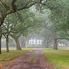 McLeod Plantation House and Avenue of Oaks