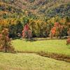 Farm along Rich Mountain Road, Brevard, NC