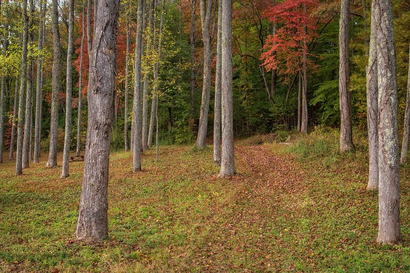 Forest, Deerwoode Resort and Cabins, Brevard, NC