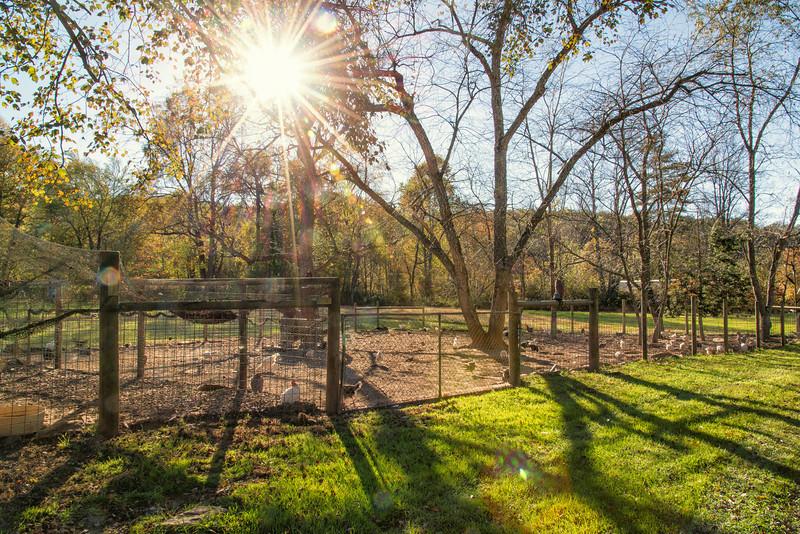 Chicken Coop, farm at Gwynn Valley Camp, Brevard, NC