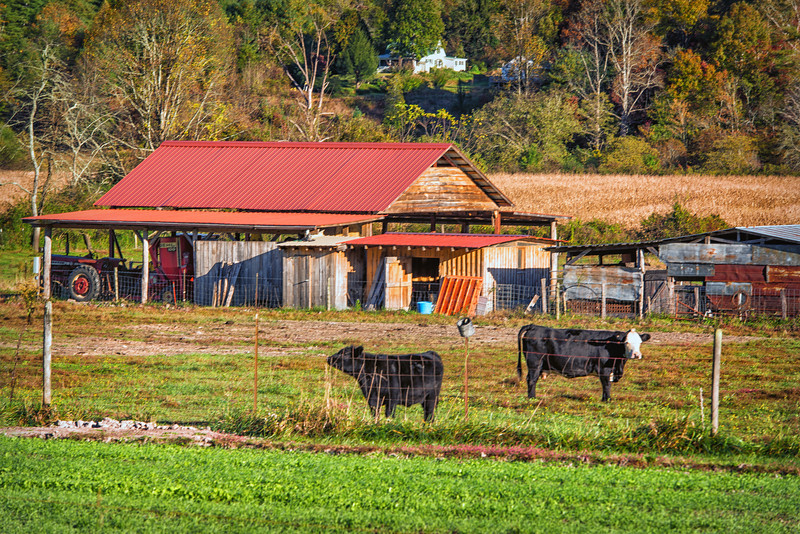 Farm, Island Ford Road, Brevard, NC