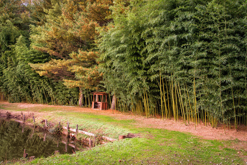 Bamboo Forest, Deerwoode Resort and Cabins, Brevard, NC