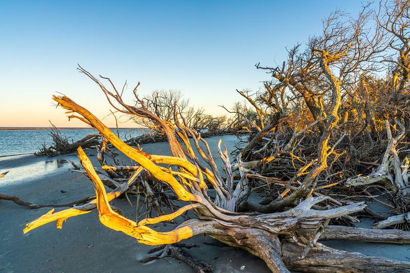 Boneyard Beach at Lighthouse Inlet Heritage Preserve