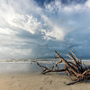 Driftwood on Folly Beach
