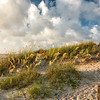 Sea Oats on Folly Beach dunes