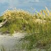 Sea Oats in Summertime, Folly Island