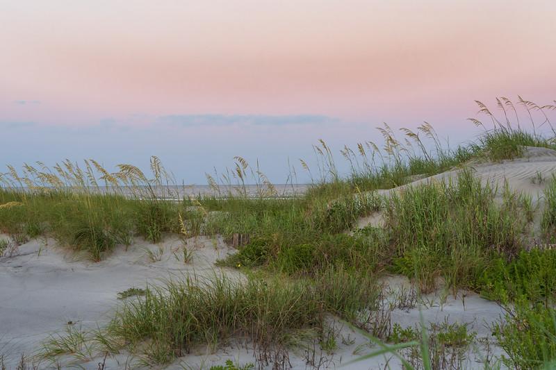 Carolina Sea Oats