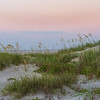 Carolina Sea Oats