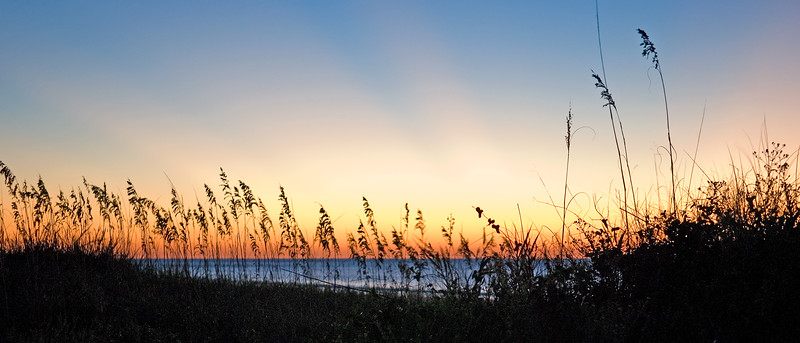 Sea oats at Folly Beach