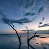 Evening Solitude, Folly Beach County Park