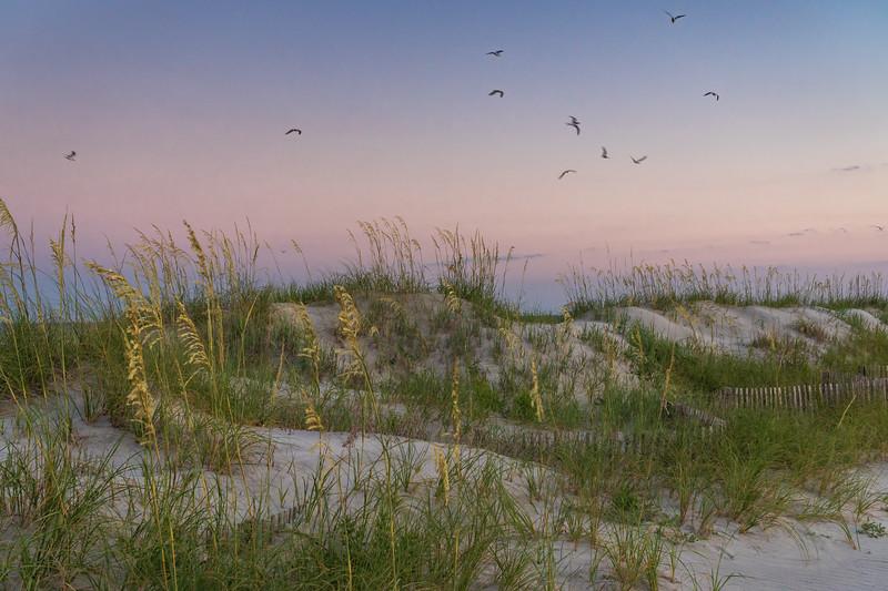 Sea Oats and Dunes on Folly Beach, SC