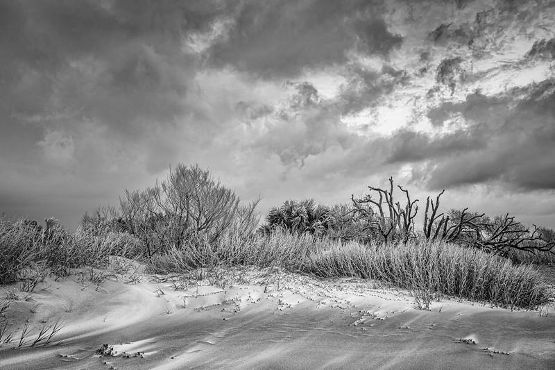 Windswept, Folly Beach